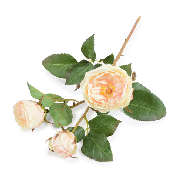 Rose Stem with Buds, Cream-blush
