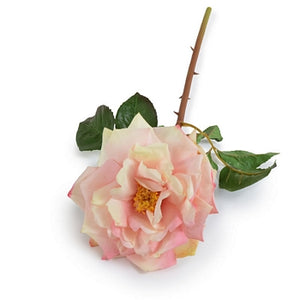 "Rose Stem, 20"" - Cream-Pink"