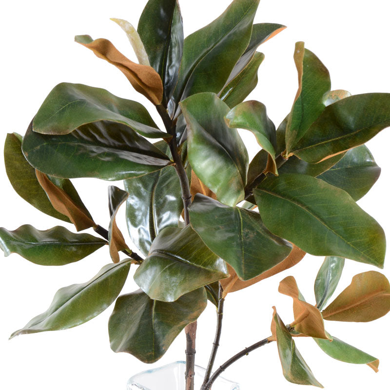 "Magnolia Leaf Spray, 36"" L"