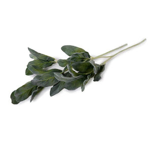 "Lamb's Ear Spray, 25"" L"