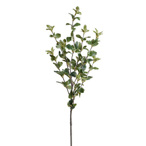 "Privet Foliage Spray, 36""L - Variegated"