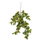 "Privet Foliage Spray, 36""L - Yellow Green"