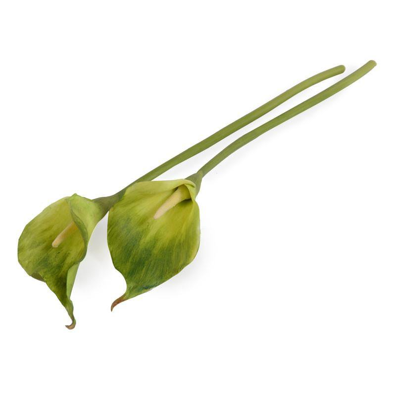 "Calla Lily Stem, Green 22"" - New Growth Designs"