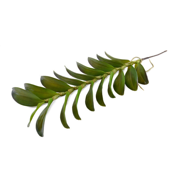 Aranda Orchid Leaf Spray - New Growth Designs