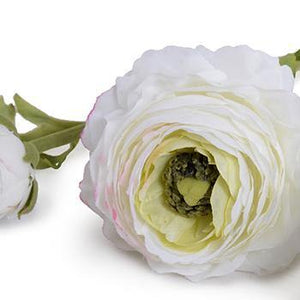 Ranunculus Flower Stem, White