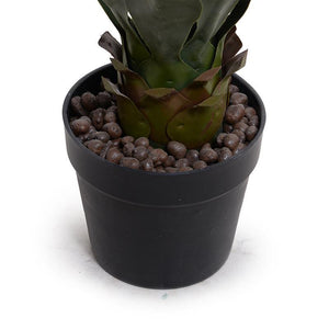 "Agave Americana Plant in Short Round Pot, 24""H"