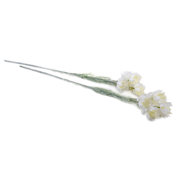 Protea Flower Stem, White