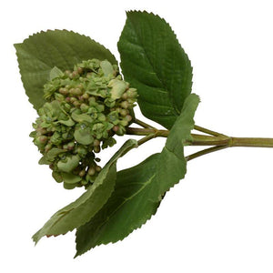 Hydrangea Flowering Bud Stem - New Growth Designs