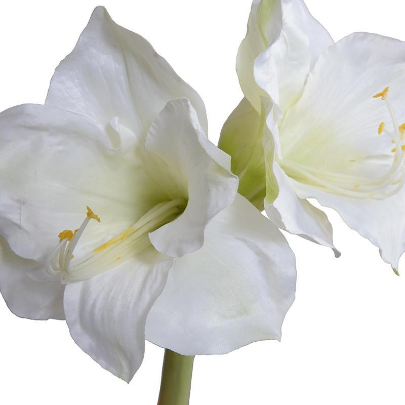 "Amaryllis Stem, 27"" L - White"