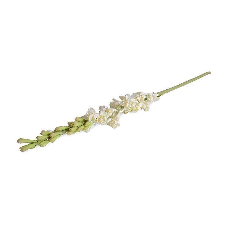 Tuberose flower stem
