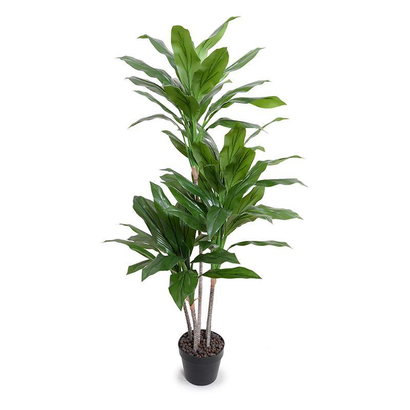 "Dracaena in Round Pot, 52""H - New Growth Designs"