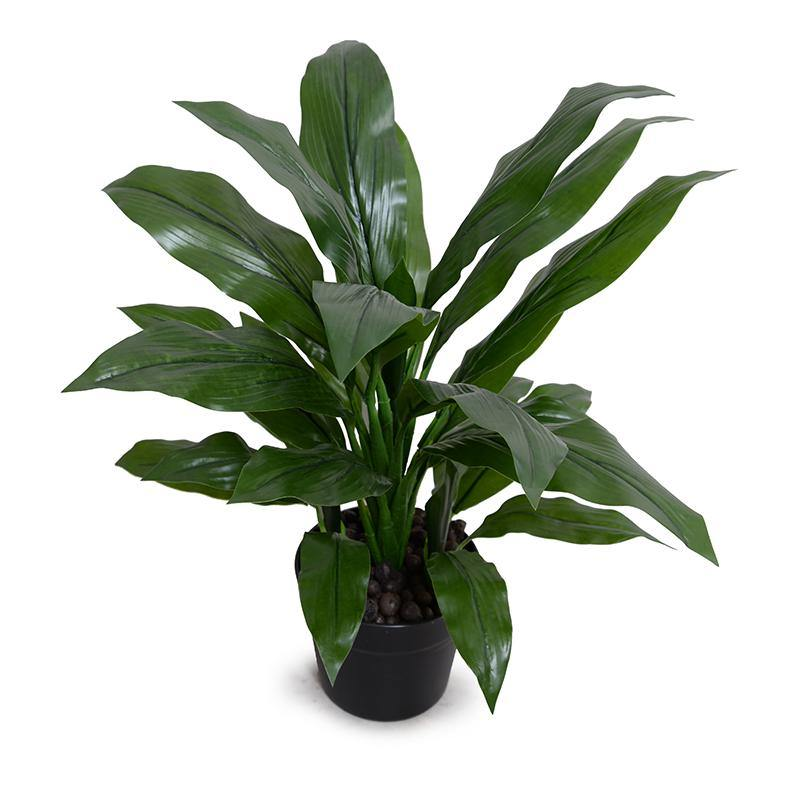 "Dracaena in Round Pot, 22""H"