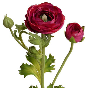 Ranunculus Spray - Beauty
