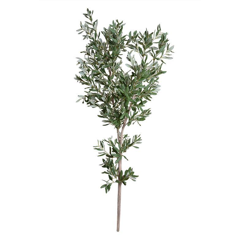Olive Tree Branch, 67""