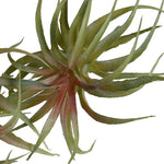 Spider Succulent - Mauve-green - New Growth Designs