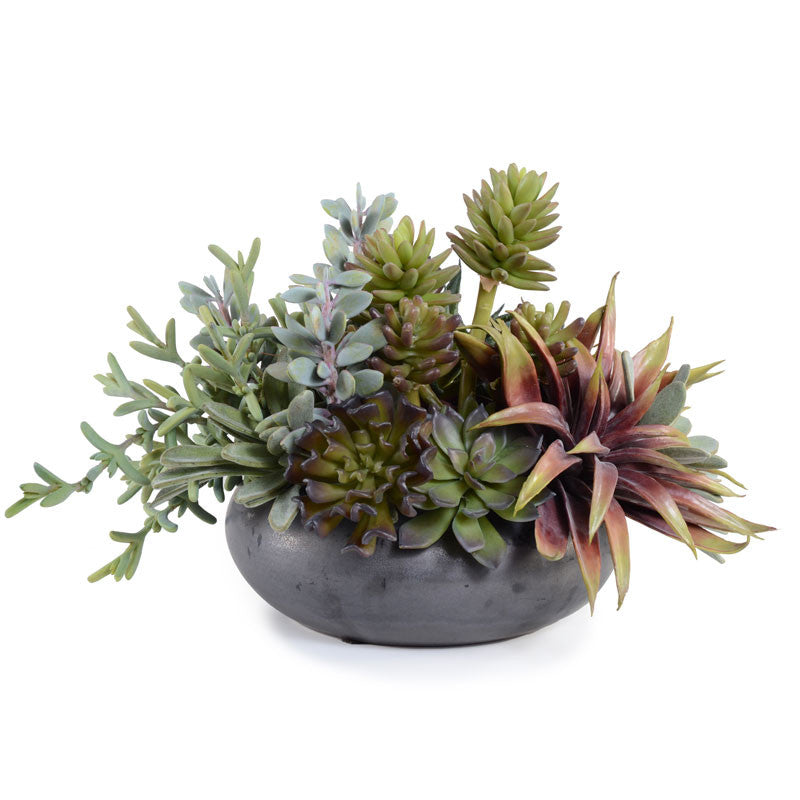 Succulents, Mixed