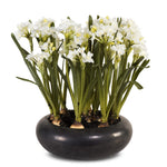 Paperwhite Narcissus Arrangement