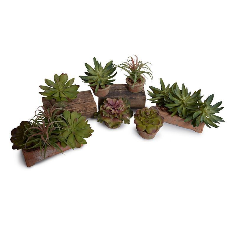 Sedum, Spider,Echeveria Succulent Planter - New Growth Designs