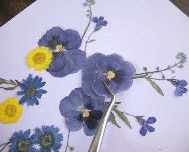 How To Use Pressed Flowers A Simple 5 Step Guide Greetings Of Grace