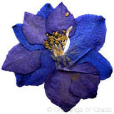 Larkspur (dark blue)