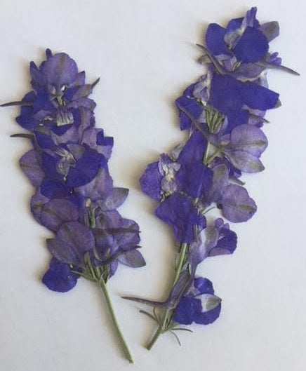 Larkspur with stem (blue)