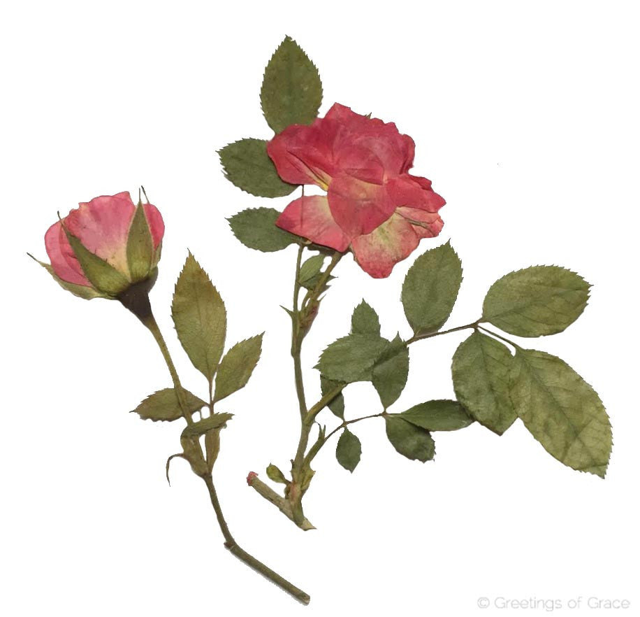 Rose with Stem (Pink)