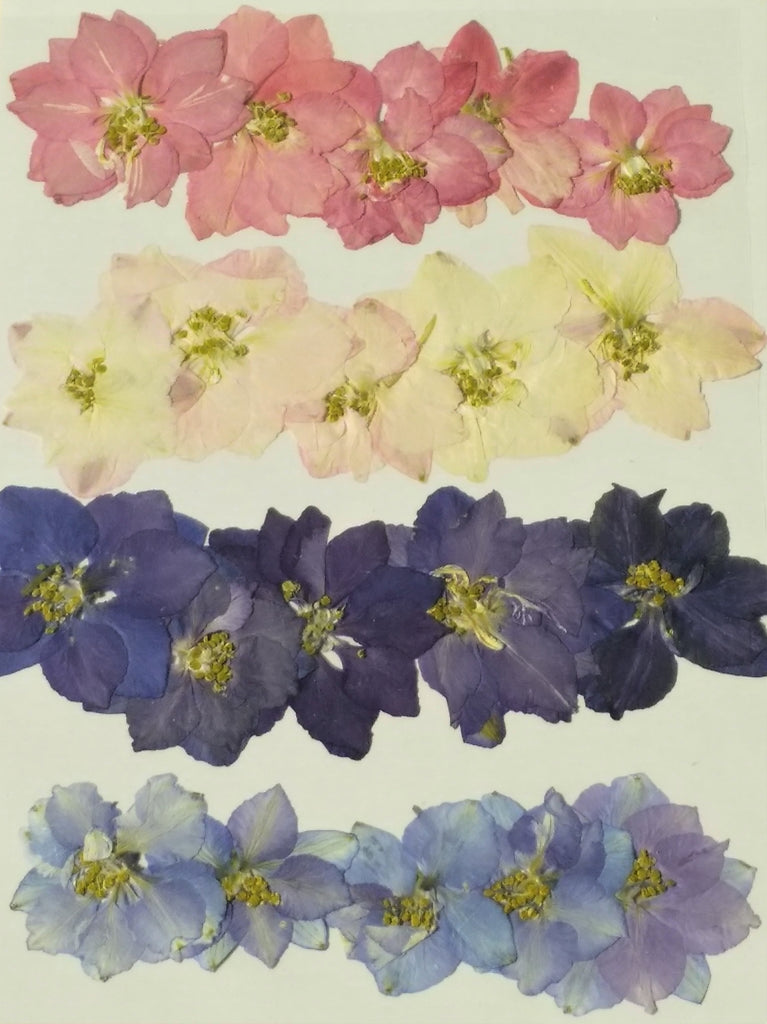 Assorted Larkspur Flowers