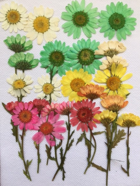 Assorted Chrysanthemum