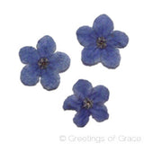 Forget Me Not Flower (dyed)
