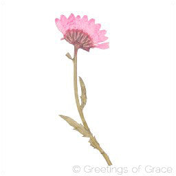 Chrysanthemum with stem (side, pink)