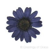 Chrysanthemum (Dark Blue)