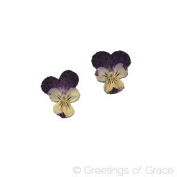 Viola (Purple and Yellow)