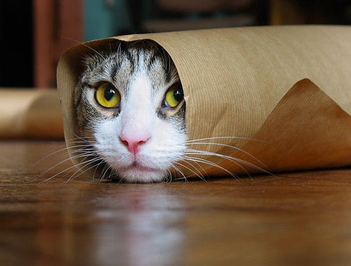 5 Ridiculously Cute Gifs for National Cat Day