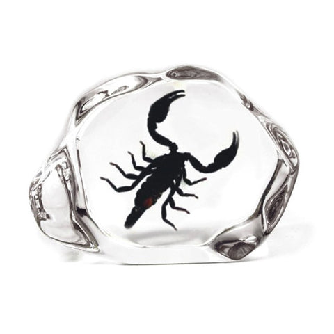 Black Emperor Scorpion Encased in Acrylic Resin - Small