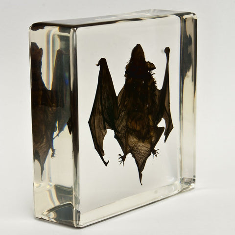 Bat Real Encased In Acrylic - Small