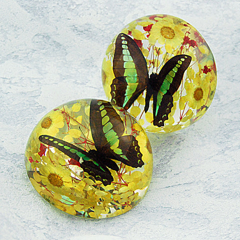 Butterfly Half-Dome Yellow Decoration Real Green Swallowtail Butterfly