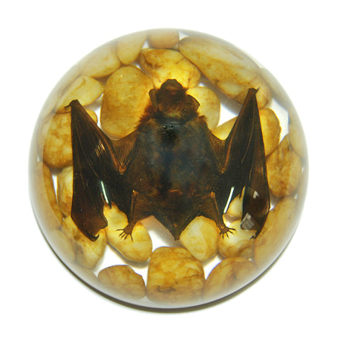 Bat Real Horseshoe Bat In Resin  - Half Dome Type