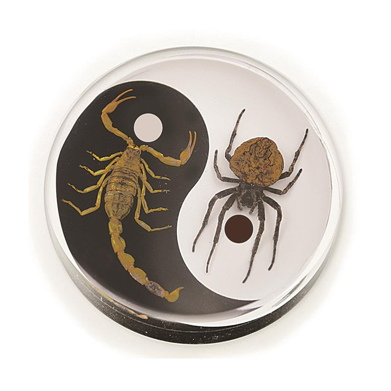 Real Wolf Spider and Bark Scorpion Yin-Yang Paperweight Hockey Puck Shape Style 2