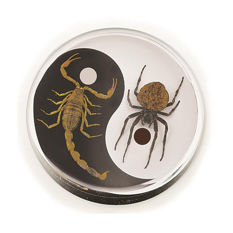 Real Wolf Spider and Bark Scorpion Yin-Yang Paperweight
