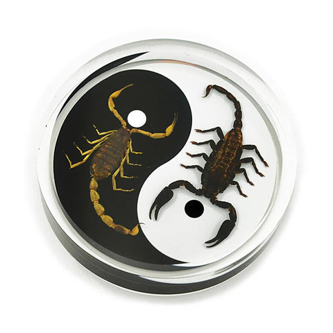 Black Emperor and Bark Scorpion Yin-Yang Paperweight Hockey Puck Shape Style 2