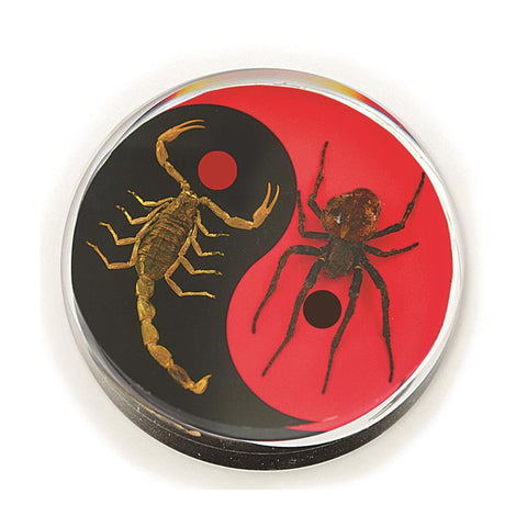 Real Wolf Spider and Bark Scorpion Red and Black Yin-Yang Scorpion Paperweight Hockey Puck Shape Style 2