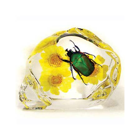 June Bug Beetle Encased in Acrylic Resin - Small