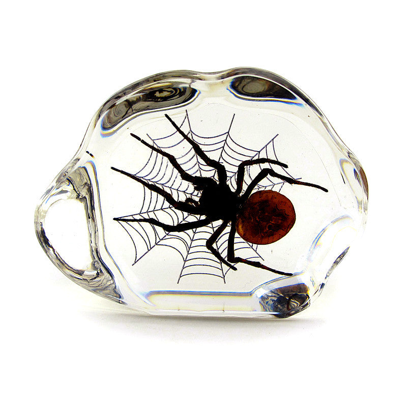Spider Real Wolf Spider In Lucite