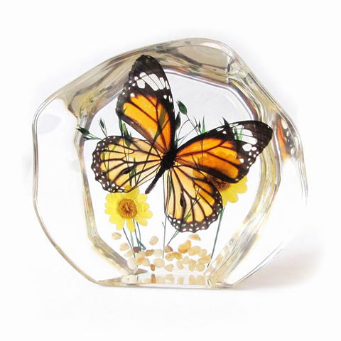 Butterfly Decoration Real Monarch Butterfly With Gift Box
