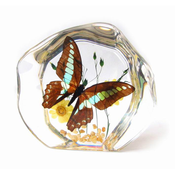 Butterfly Decoration Real Green Swallowtail Butterfly With Gift Box