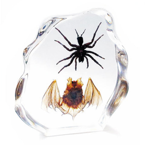 Bat and Tarantula Spider Real Intermediate Horseshoe and Medium Size Tarantula in Resin - Large