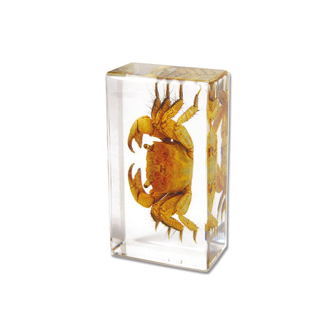 Crab In Lucite -Small