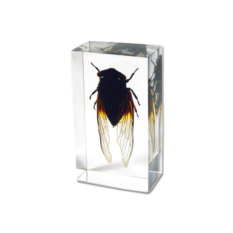Cicada In Acrylic  Lucite Resin - Small Size