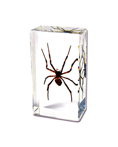 Spider Real Wolf In Lucite -Small