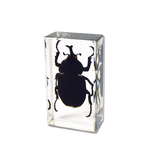 Rhinoceros Beetle In Acrylic  Lucite Resin - Small Size